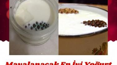 Dünyada Mayalanmış, Mayalanacak En İyi Yoğurt Ham Kozalak İle Yapılandır